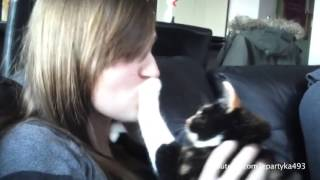 cats and dogs who hates kisses :)