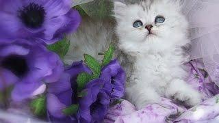 Котята в Цветах! Фото Котят под Музыку! Кошка Прикол!