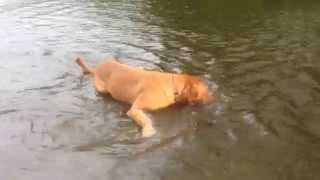 Dog Throws Herself In La River