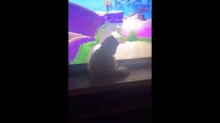 Cat Thinks She's A Part Of A Video Game