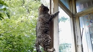 Мой кот идиот достанет все!/Смешные коты 2016