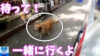 飼い主が乗る救急車を追いかけた犬。全力で病院まで走り続けた姿に心温まる【感動】