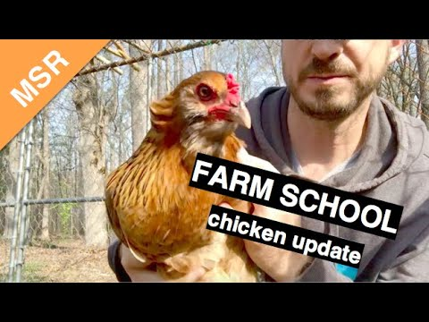 The Montessori School of Raleigh Urban Farm - Chicken Update
