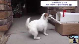 Pomeranian Puppy Toilet Training - Free Mini Course