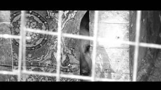 Кемеровский приют для бездомных животных