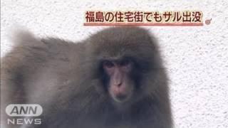 福島県郡山市の住宅街にサルが出没し、現在も逃走中です。 ・・・記事の...