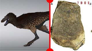 nanotyrannus-solved-dinosaur-skin-containing-cells-discovered-7-days-of-science