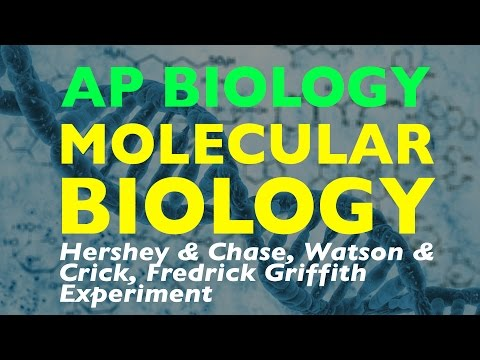 AP Biology: Hershey & Chase, Watson & Crick, Fredrick Griffith Experiment