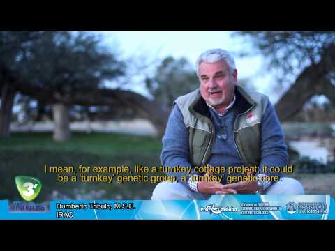 """Exporter Group of animal genetics ARBO, """"Know how"""" of Cordoba to the world"""