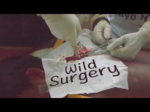 Wild surgery, Kids and Medecine mission in Lawaan, Philippines - By OrDub