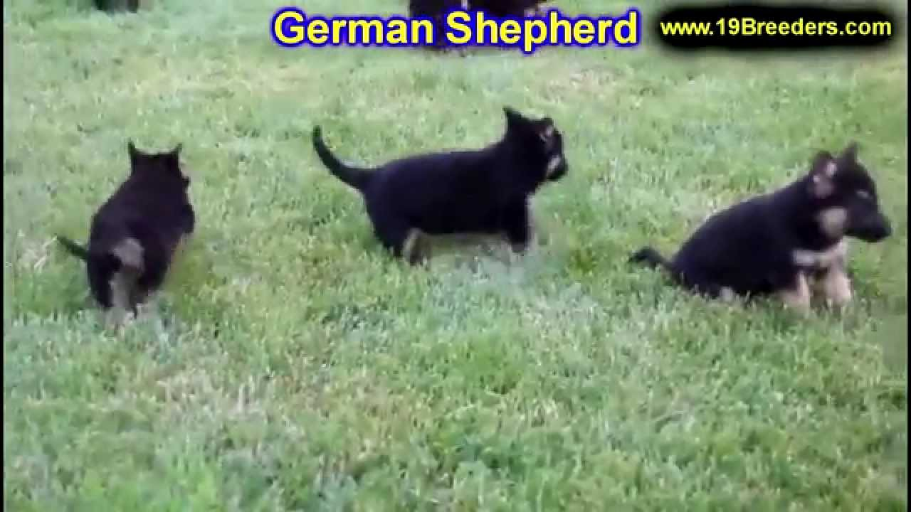 german shepherd puppies dogs for sale in birmingham