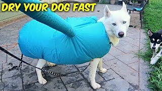 fastest way to dry your dog