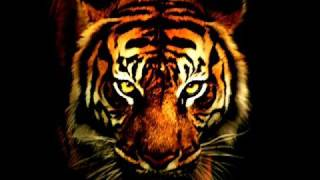 Crew 7- Eye Of The Tiger dancehall mix