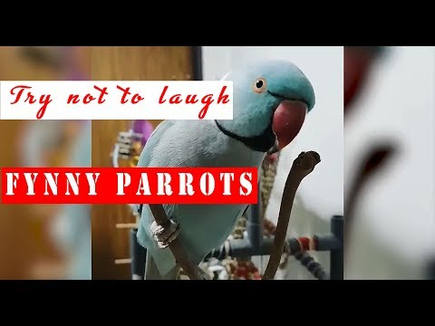 PARROTS GOING CRAZY  Try not to laugh