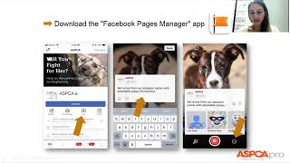 How Shelters and Rescues can Leverage Facebook Live to Increase Engagement