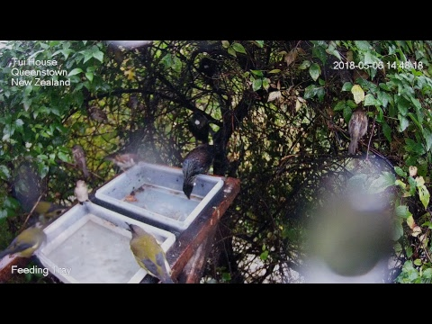 Tui House Queenstown Live Stream
