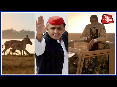 CM Akhilesh Yadav Takes A Jibe At Modi, Amitabh Bachchan, Says He Should Stop Advertising For Gujrat