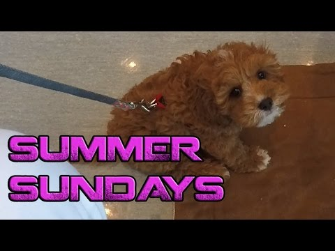 Summer Sundays - Puppy School
