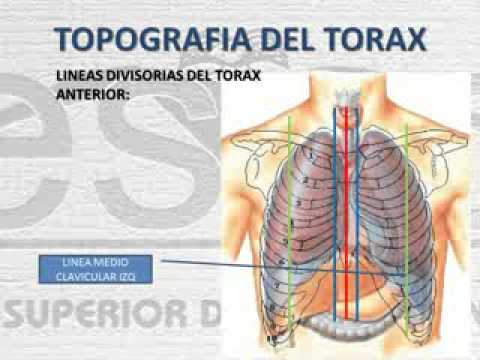 ANATOMIA DEL TORAX - YouTube