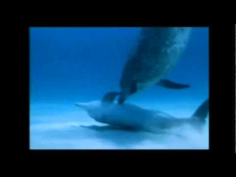 Delfinlərdəki Qayğı və Şəfqət
