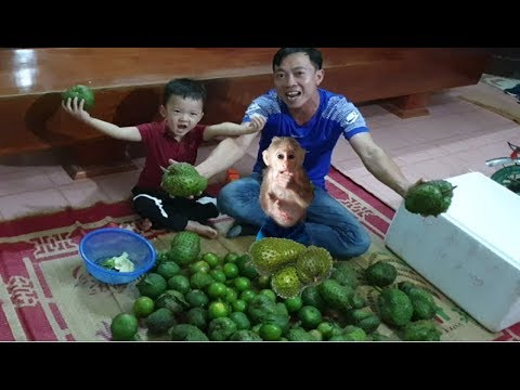 Baby Monkey | Doo's Family Receives Gifts From Grandparents - Funny animals