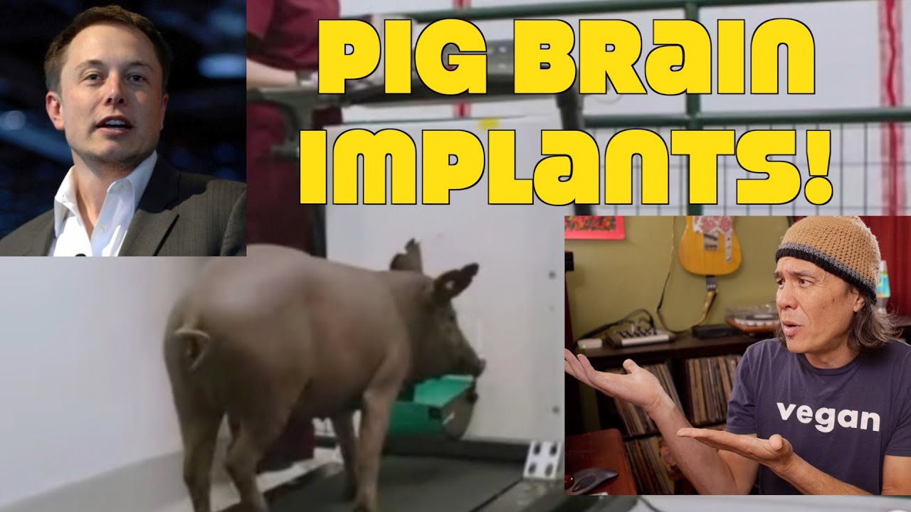 Elon Musk: Stop Putting Computer Implants In Pig's Brains! WTF?!