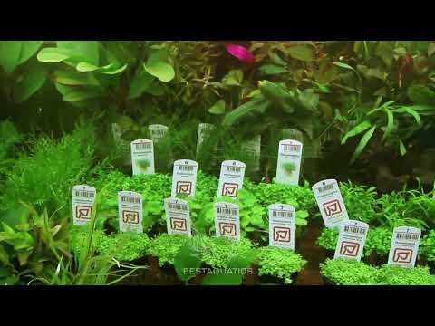 Коммерческое предложение по аквариумным растениям и рыбка. Компания BestAquatics