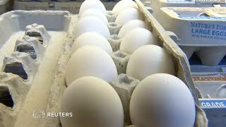 Over 200 million eggs recalled in salmonella scare