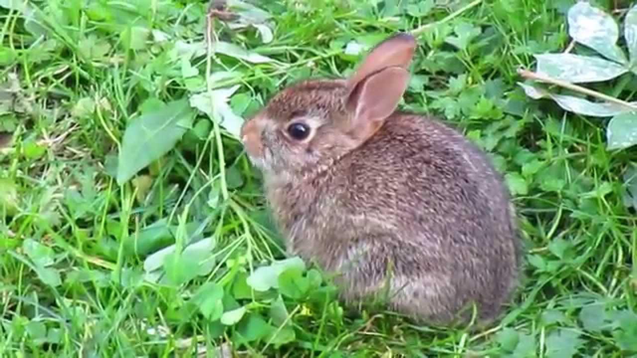 Baby Rabbit in Back Yard - Version 9.15.14 - YouTube