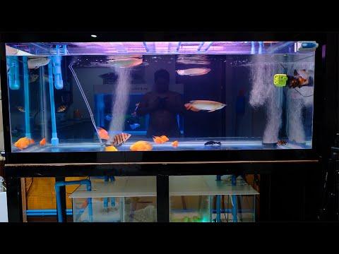 วิธีทำระบบกรองระบบน้ำตู้ปลาให้น้ำใสได้หลายเดือนด้วยตัวเองโดยไม่ต้องล้างตู้บ่อยๆ [นายตัวเอง]