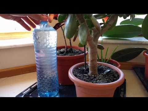 self Watering system for plants DIY