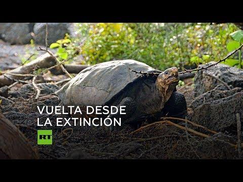 RT en Español: Encuentran una tortuga que se consideraba extinta
