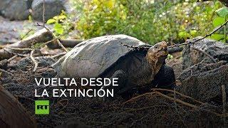 Encuentran una tortuga que se consideraba extinta
