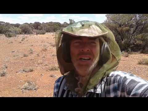 GOLD FEVER  -  Western Australia