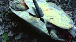 controversial Flicks  - Cannibal Holocaust 1980