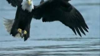 The Eagle and the Hawk - John Denver