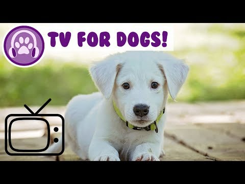 Dog TV! Bird and Nature TV to Chill Dogs!