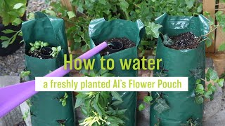 How to Water a Freshly Planted Al's Flower Pouch