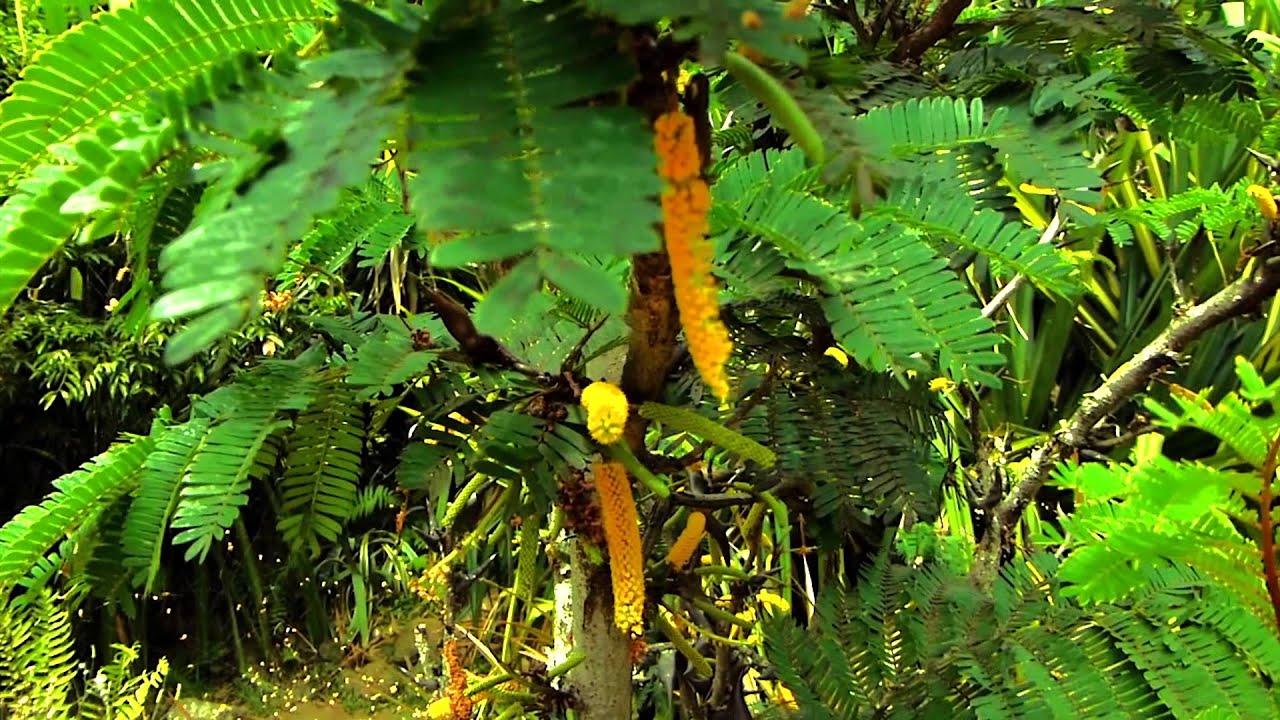 5576 arbusto con flores amarillas efecto plantas for Arbustos con flores