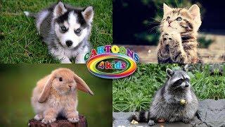 Изучаем домашних животных для детей. Развивающее видео с голосами животных