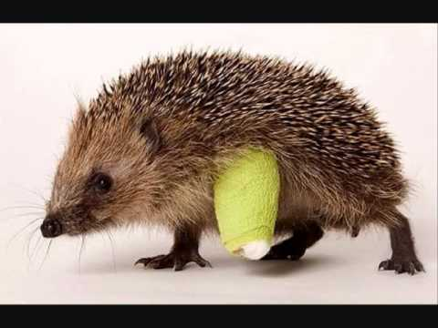The Hedgehog Song - Chris T-T