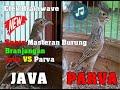 Gambar cover Suara Masteran Burung Branjangan Jenis Java Dan Parva Gacor Dor