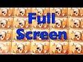 PIRATE SHIP Slot Machine - Full Screen of Skulls- MEGA BIG WIN - WMS Pokies