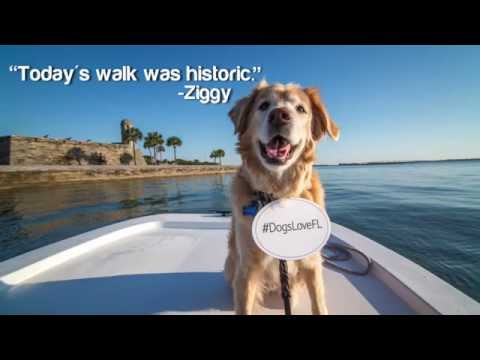 Florida Travel: A Dog's View of St. Augustine