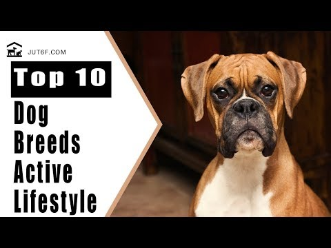 Active Dogs - Top 10 Dog Breeds To Match Your Active Lifestyle