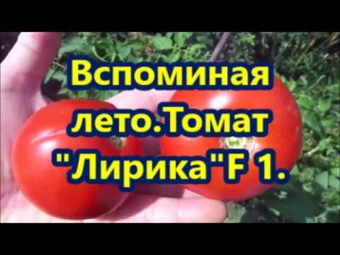 """Вспоминая лето.Томат """"Лирика F1."""