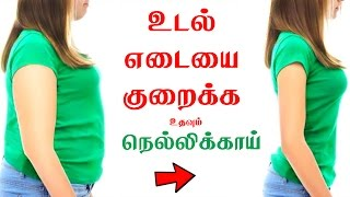 Video How to Use Amla for Weight Loss - Tamil Health Tips download MP3, 3GP, MP4, WEBM, AVI, FLV September 2018
