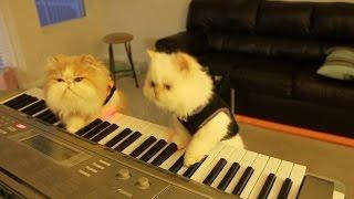Коты музыканты играют кошачьи вальс)