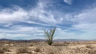 Ocotillo thu Yuha Desert to US Border