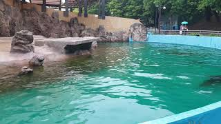 Grand park in Seoul. Sea lion is crying